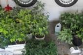 29 Cannabispflanzen mit professioneller Aufzuchtanlage sichergestellt / DE Waalkirchen