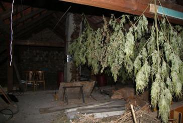 03.01.2019 AT Graz: Organisierter Drogenhandel aufgedeckt